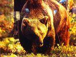 Karhu olisuloinen